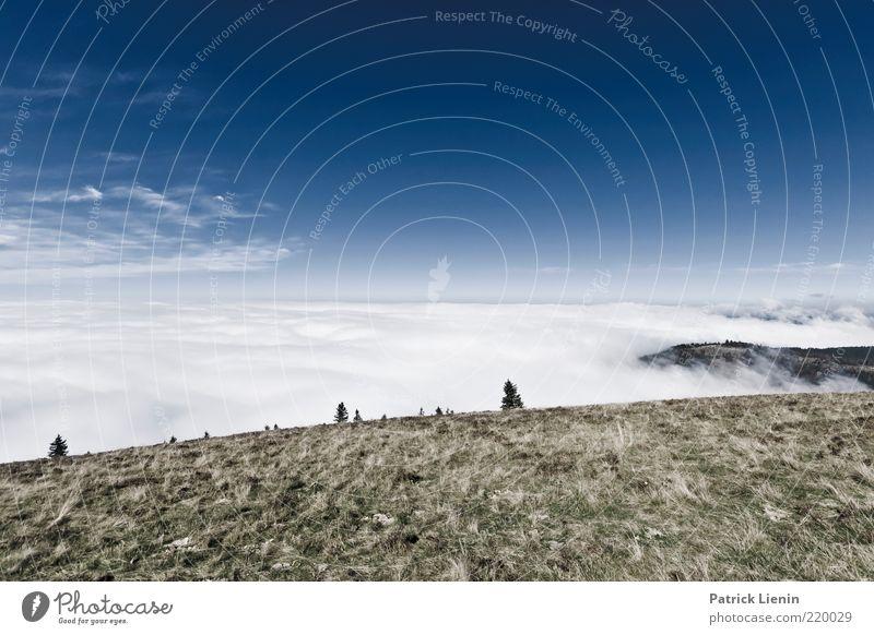 Über den Wolken Himmel Natur blau weiß schön Baum Umwelt Landschaft Wiese kalt Berge u. Gebirge Herbst Luft Stimmung Wetter