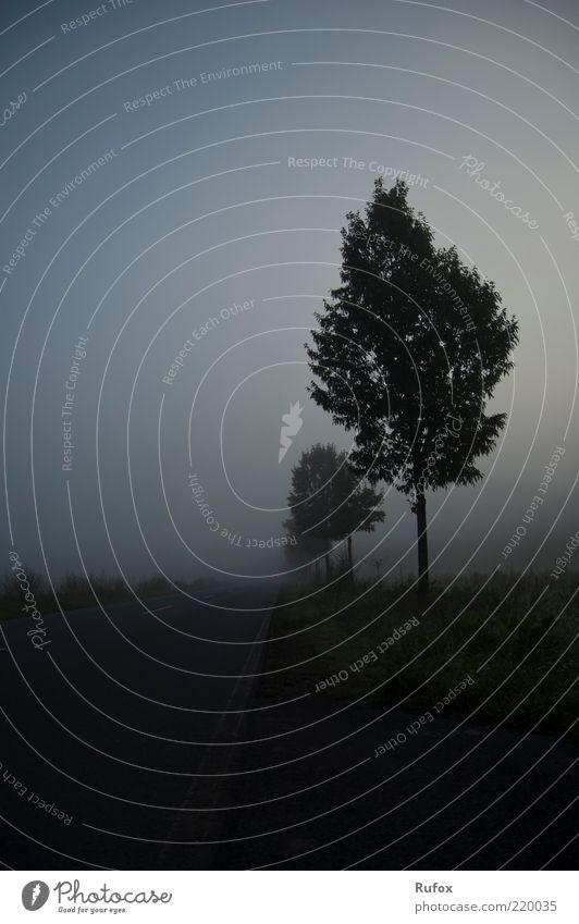 Verschwinden im Nebel - Der Morgen danch ... Natur alt Baum Pflanze Einsamkeit Straße Wiese Gras grau Angst bedrohlich außergewöhnlich gruselig Straßenbelag