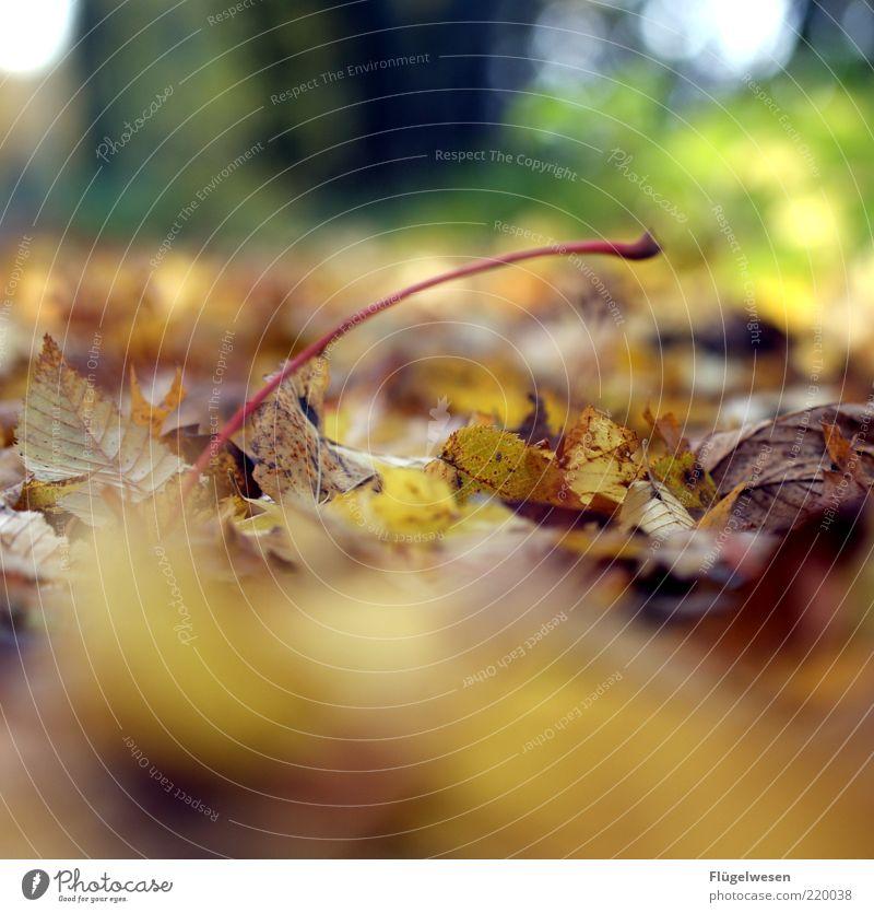 Nicht noch ein Herbstbild ;-( Umwelt Natur Landschaft Pflanze Klima Klimawandel schlechtes Wetter Unwetter Regen Blatt Grünpflanze Waldboden Herbstlaub