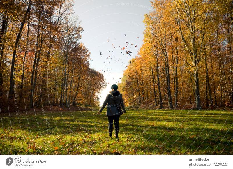 Herbst Ausflug Spaziergang Mensch Junge Frau Jugendliche Erwachsene Leben 18-30 Jahre Umwelt Natur Landschaft Wetter Schönes Wetter Blatt Wiese Wald