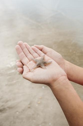 Fürsorge Ferien & Urlaub & Reisen Ausflug Sommer Sommerurlaub Strand Meer Mensch Hand Natur Wildtier Seestern Gefühle Sicherheit Schutz Tierliebe Mitgefühl