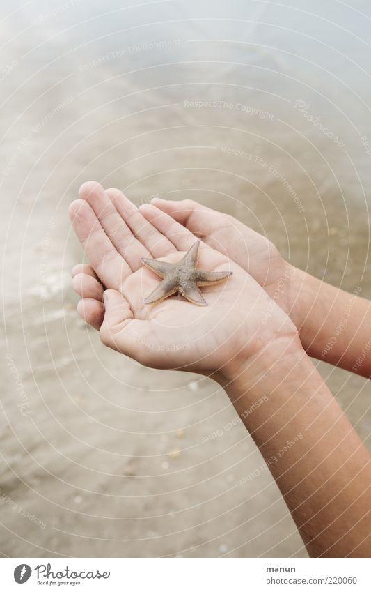 Fürsorge Mensch Natur Wasser Hand Ferien & Urlaub & Reisen Meer Sommer Strand Leben Gefühle Wildtier Ausflug Hilfsbereitschaft Sicherheit einzigartig festhalten