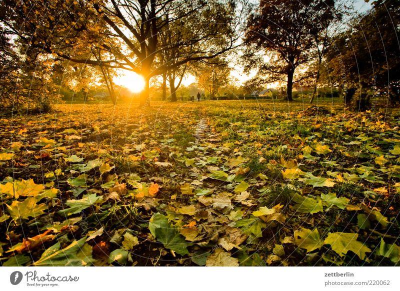 Sonnenuntergang in der Kleingartenkolonie Umwelt Natur Landschaft Pflanze Erde Sonnenaufgang Sonnenlicht Herbst Klima Wetter Schönes Wetter Baum Gras Blatt Park
