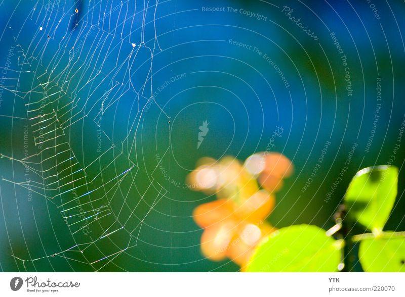 Altweibersommer Umwelt Natur Pflanze Luft Schönes Wetter Sträucher Blatt Grünpflanze frisch glänzend weich Spinnennetz Netz Spannung Loch Muster Stimmung