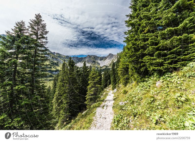 Alpenwanderweg Ferien & Urlaub & Reisen Ausflug Freiheit Sommer Sommerurlaub wandern Natur Landschaft Wolken Wald Berge u. Gebirge Gipfel Wege & Pfade Erholung