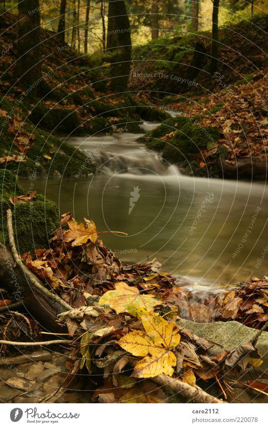 Herbstkitsch Natur Wasser schön Baum ruhig Blatt gelb Wald Freiheit träumen Landschaft braun Umwelt Erde ästhetisch