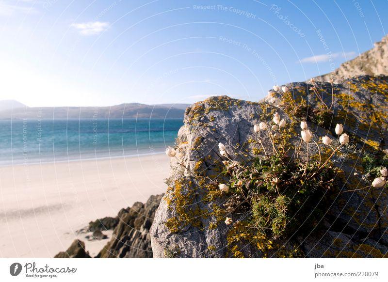 Mauer-Blümchen ruhig Ferien & Urlaub & Reisen Tourismus Ferne Sommer Sommerurlaub Strand Meer Natur Pflanze Sand Wasser Herbst Schönes Wetter Blume Felsen Küste