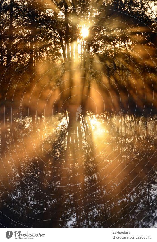 Sonnendusche für trübe Tage Natur Landschaft Pflanze Urelemente Wasser Sonnenaufgang Sonnenuntergang Schönes Wetter Baum Sträucher Seeufer Teich leuchten