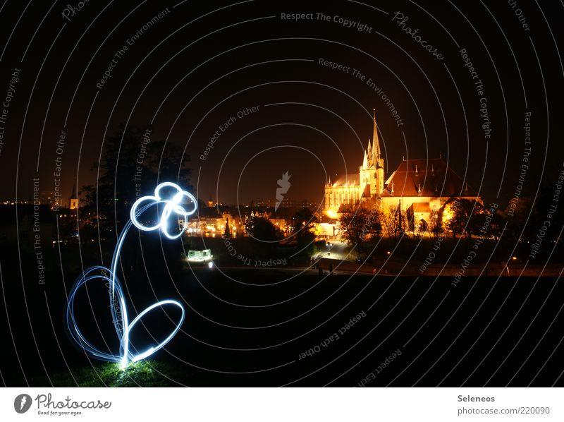 Löwenzahn Blume Stadt Kirche Freizeit & Hobby Streifen Blühend leuchten Skyline Langzeitbelichtung Dom Lichtspiel Sehenswürdigkeit Lightshow Taschenlampe Erfurt