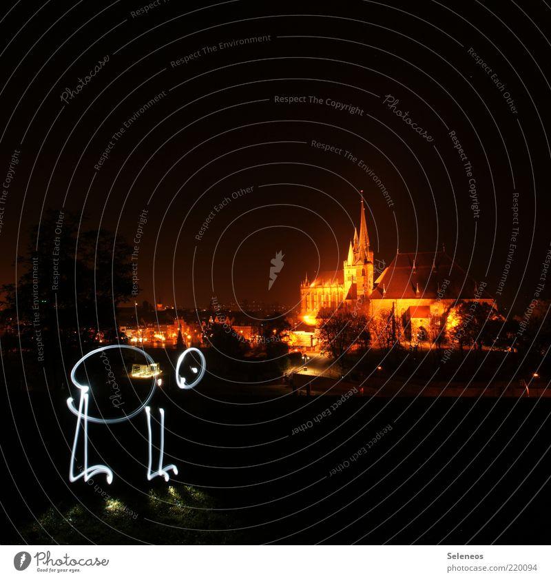 Sightseeing Erfurt Stadt Altstadt Skyline Kirche Dom Sehenswürdigkeit glänzend leuchten Lichtschein Farbfoto Außenaufnahme Textfreiraum oben Dämmerung Nacht