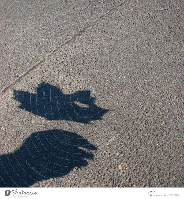 Herzblatt Hand Pflanze Blatt Herbst natürlich Hoffnung Asphalt festhalten Vertrauen Zeichen Teer Schattenspiel Mensch herzförmig