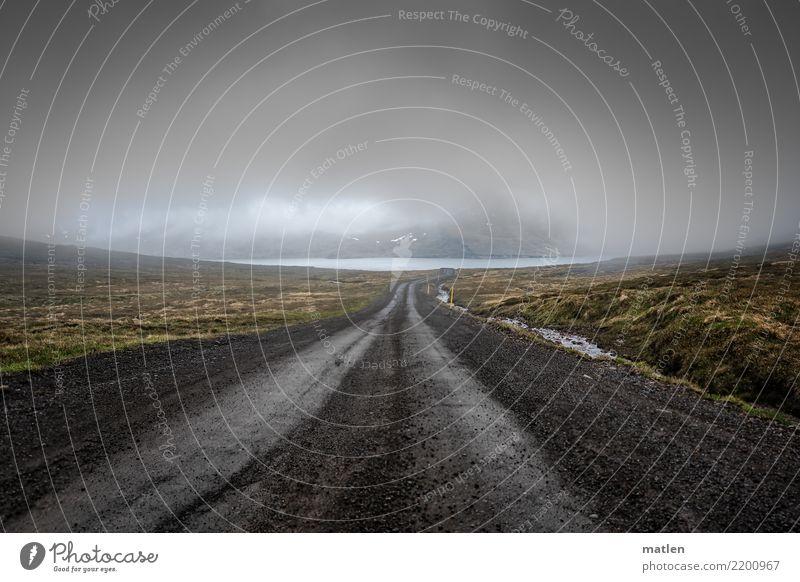 dem Himmel nah Natur Landschaft Wolken dunkel Berge u. Gebirge Frühling Küste Gras Felsen Regen trist Wind tief Verkehrswege Island