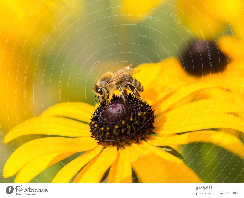 Noch ist es schön..... Sommer Sonne Sonnenbad Umwelt Natur Sonnenlicht Frühling Herbst Schönes Wetter Pflanze Blüte Nutzpflanze Garten Park Wiese Tier Nutztier