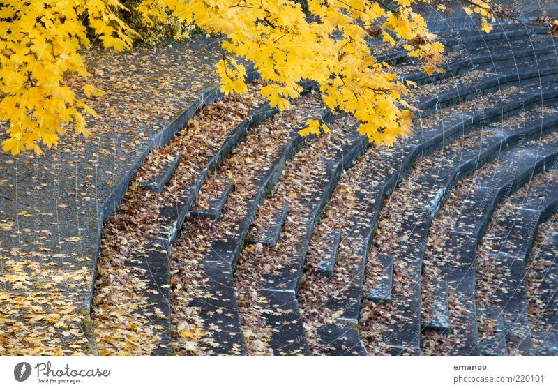 Zuschauerherbst Sportstätten Stadion Natur Herbst Klima Baum Blatt Treppe alt gelb grau Linie Kurve rund eckig Beton verfallen leer Fußballstadion hoch aufwärts