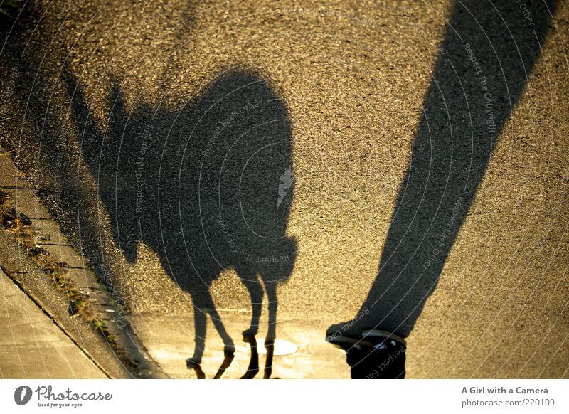 überdimensional ******* 100 Fotos + Jahrestag ******** maskulin Mann Erwachsene Beine Fuß Mensch Straße Schuhe Hund Tier stehen warten gold grau schwarz