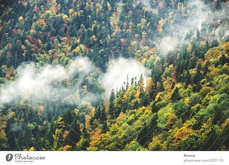 Herbstzeichen Wolken Nebel Herbstlaub Wald Berge u. Gebirge Bergwald grün weiß Einsamkeit Natur ruhig Umwelt steil Berghang Farbfoto Außenaufnahme Menschenleer