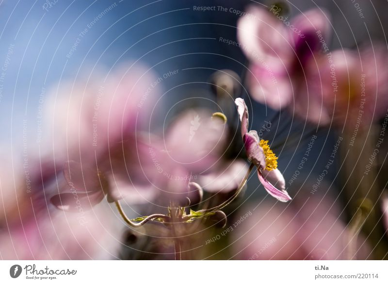 auf die 100 Umwelt Natur Pflanze Blume Blatt Blüte Blühend Duft Wachstum authentisch schön natürlich blau rosa Erholung Farbfoto Nahaufnahme Menschenleer Tag