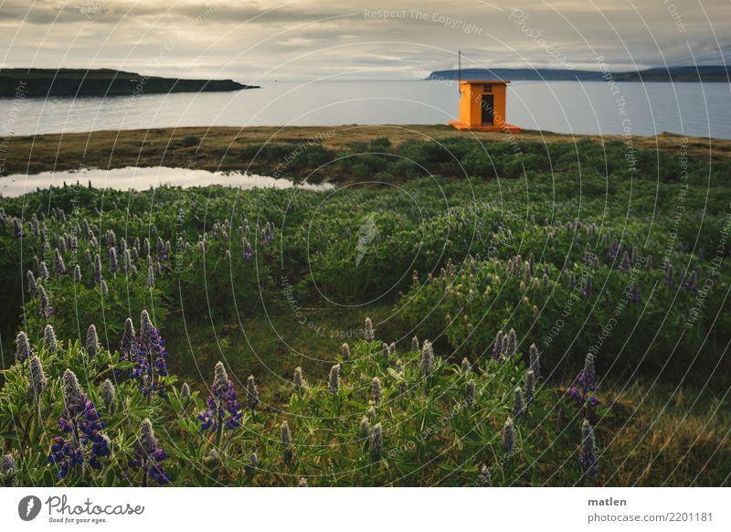 Leuchttuermchen Landschaft Pflanze Wasser Himmel Wolken Horizont Frühling Wetter Schönes Wetter Blume Gras Wildpflanze Hügel Felsen Küste Fjord blau braun grün
