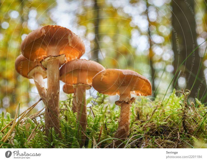 Langstielig Natur Pflanze Tier Herbst Moos Farn Park Wald Essen Wachstum Gesundheit Pilzgruppe Pilzhut Pilzsucher Pilzsuppe Farbfoto mehrfarbig Außenaufnahme