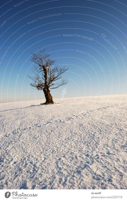 the old beech Freiheit Winter Schnee Natur Landschaft Wolkenloser Himmel Schönes Wetter Eis Frost Baum Rhön Holz alt blau braun weiß Einsamkeit einzigartig kalt