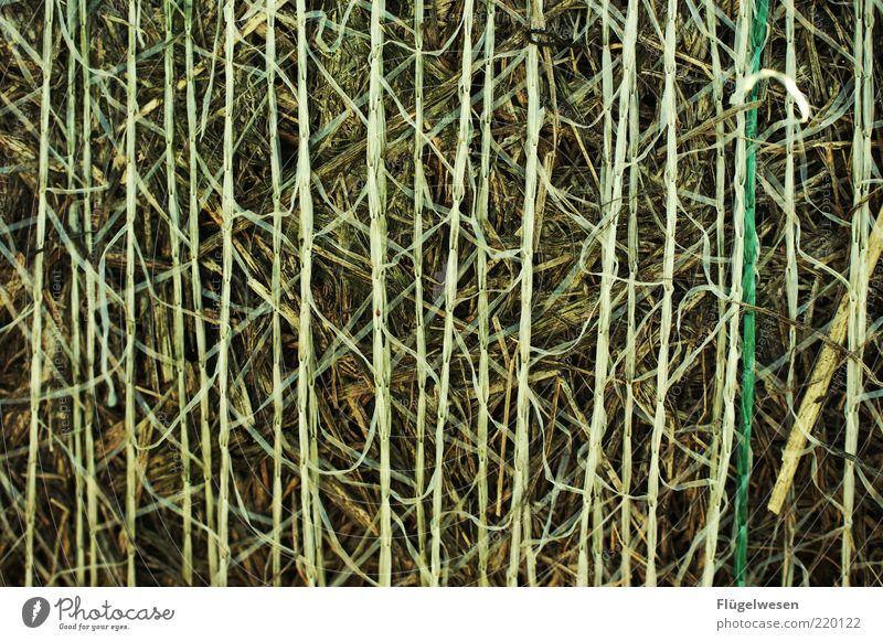 Strohdumm Natur Umwelt Klima rein Getreide trocken Halm vertikal vertrocknet Weizen Stroh Heu Textfreiraum Gerste Hopfen Landwirtschaft