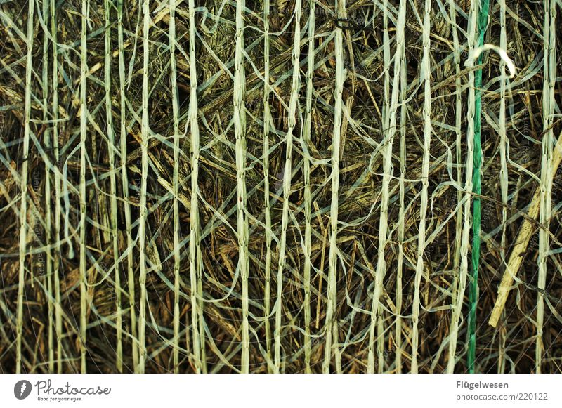 Strohdumm Umwelt Natur Klima Nutzpflanze rein Getreide Heu strohig Weizen Gerste Hopfen Hafer Strohballen Strohmatte Farbfoto Außenaufnahme Menschenleer