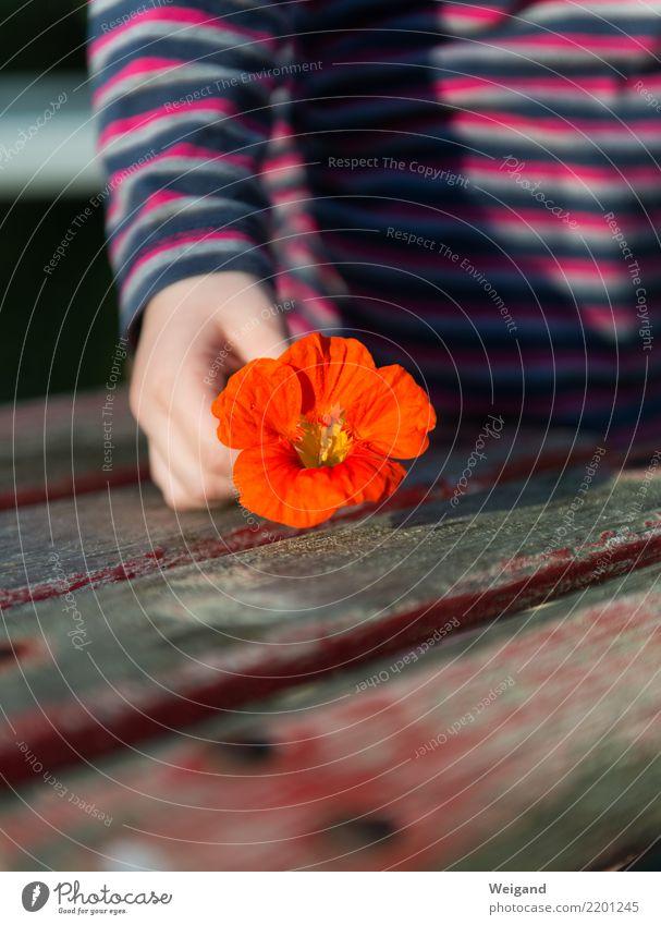 Ein Geschenk Freude Glück Gesundheit Wellness Leben harmonisch Wohlgefühl Zufriedenheit Sinnesorgane Erholung ruhig Meditation Duft Kind Kleinkind Mädchen