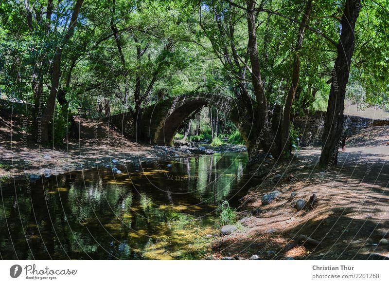 Venezianische Brücke Natur Ferien & Urlaub & Reisen Sommer Landschaft Baum Erholung ruhig Ferne Wald Leben Umwelt Tourismus Ausflug Zufriedenheit wandern