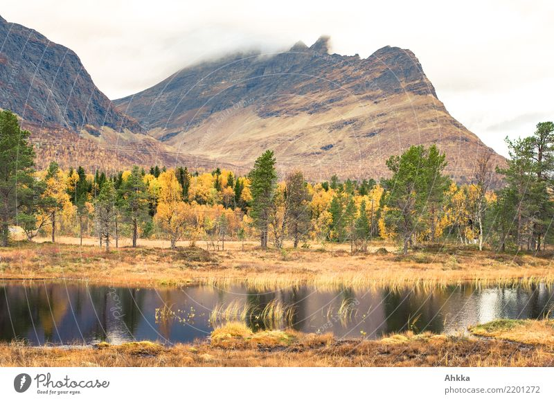 Moorlandschaft in Norwegen im Herbst Tourismus Abenteuer Landschaft Urelemente schlechtes Wetter Baum Berge u. Gebirge Sumpf Teich dunkel ruhig Einsamkeit