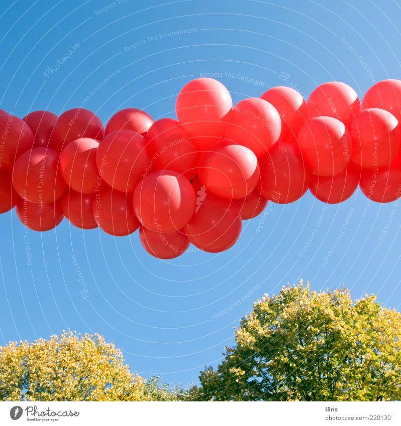 feierlich Himmel blau grün Pflanze rot Freude Blatt Herbst Gefühle Linie Feste & Feiern Fröhlichkeit Luftballon Dekoration & Verzierung Lebensfreude