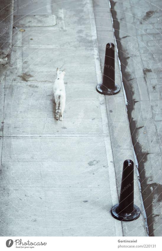Walking Alone Tier Katze 1 frei trist grau Bürgersteig Einsamkeit wild Poller Rückansicht Beton Schwanz laufen Menschenleer freilebend Bordsteinkante Rinnstein