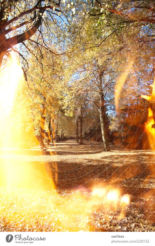 Durch's Feuer gehen Baum Blatt Herbst Traurigkeit Wege & Pfade Park Wärme braun Brand Trauer Vergänglichkeit leuchten brennen Fußweg Schönes Wetter