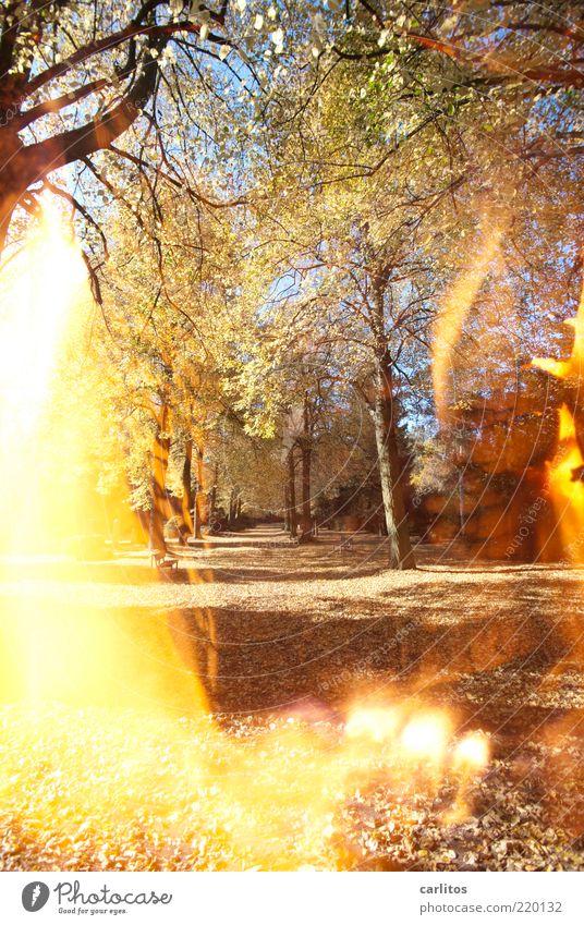 Durch's Feuer gehen Sonnenlicht Herbst Schönes Wetter Baum Park leuchten braun Traurigkeit Trauer Vergänglichkeit verlieren Blatt Doppelbelichtung Wege & Pfade