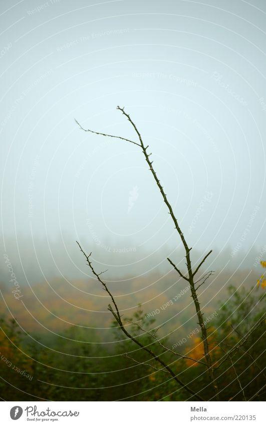 Herbst Umwelt Natur Landschaft Pflanze Himmel Klima Wetter schlechtes Wetter Nebel Ast Wald verblüht dehydrieren Wachstum natürlich grau Stimmung Ende