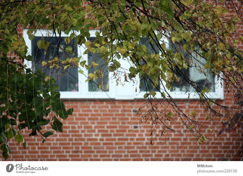 Blick ins Grüne Natur Baum grün rot ruhig Blatt Haus Wand Fenster Mauer Gebäude Fassade beobachten Ast Backstein Fensterscheibe