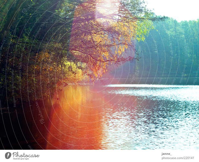 buntes am see Umwelt Natur Landschaft Pflanze Wasser Himmel Sonne Sonnenlicht Herbst Schönes Wetter Baum blau gold grün Farbfoto mehrfarbig Außenaufnahme
