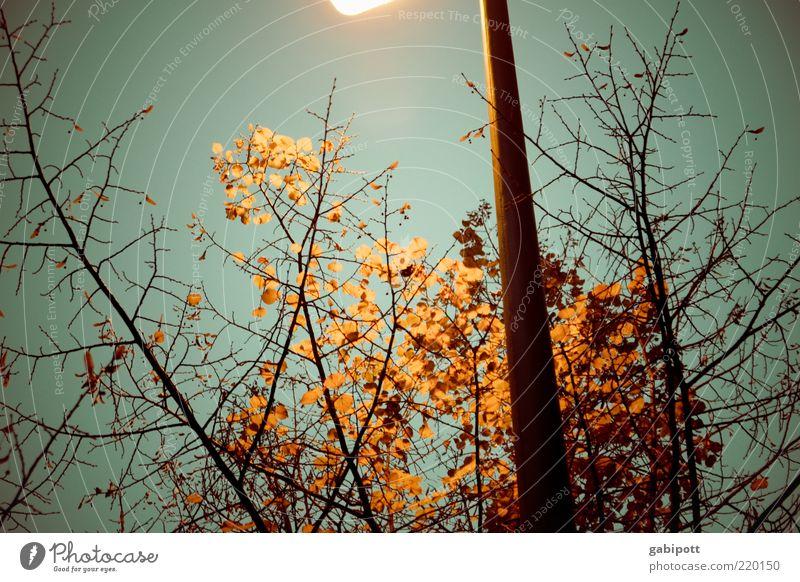 herbstlaub leuchtet im Dunkeln Himmel blau Pflanze Blatt dunkel kalt Herbst braun Beleuchtung Laterne vertrocknet Herbstlaub Zweige u. Äste Laternenpfahl Nacht