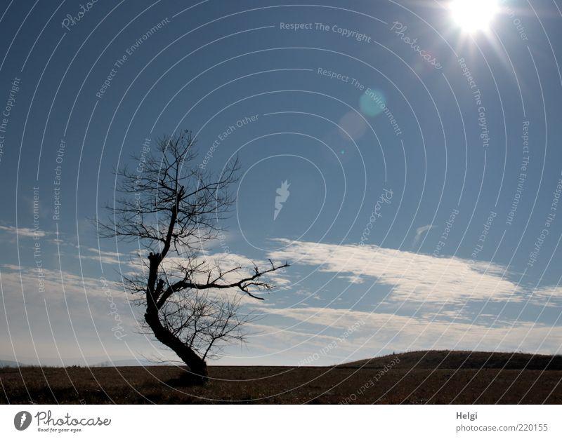 bizarre Schönheit... Natur Himmel weiß Baum Sonne blau Pflanze schwarz Wolken Einsamkeit Wiese Herbst Gras Landschaft Umwelt Horizont