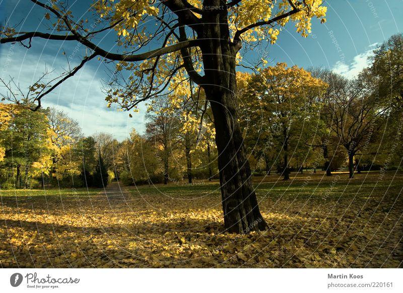 Ein Tag im Jahr Natur Himmel Baum ruhig Wolken Ferne gelb Herbst Wege & Pfade Park Landschaft Stimmung Umwelt gold Zeit ästhetisch