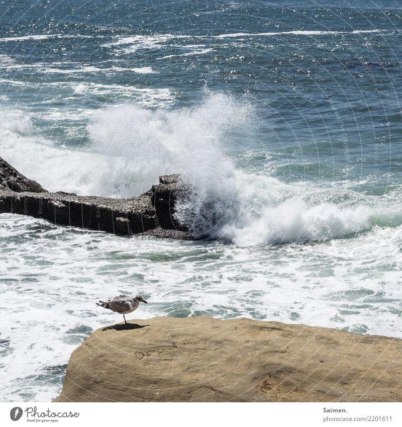 Sunset Cliffs Sonnenuntergang Klippen Brandung Felsen Gischt San Diego Pazifik wellen Möwe vogel Wellen Wasser Meer maritim Kalifornien USA Strand Natur leben