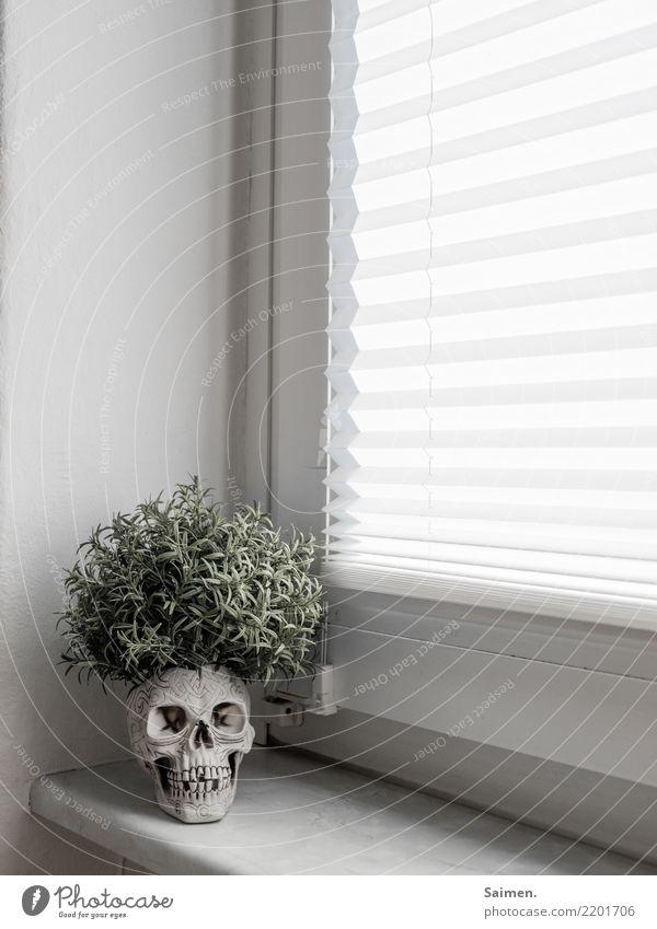 Aus alt wird neu vergänglich verstörend abstrakt skurril Zähne Gebiss Kreislauf pflanze leben Tod kopf Schädel Totenkopf fenster Fensterbank Rollo wachsen
