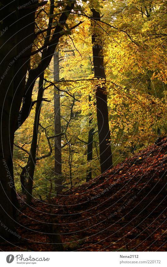 Schwarz-Gelb... mit etwas Rot-Grün Umwelt Natur Landschaft Erde Sonnenlicht Herbst Klima Wetter Baum Oktober November Blatt Wald Beleuchtung braun mehrfarbig