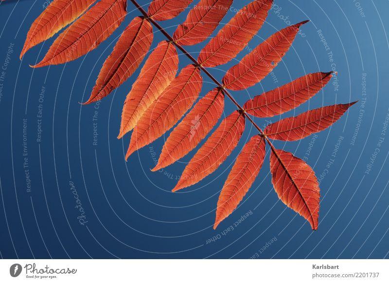 Herbstrot Lifestyle Gesundheit Leben Ferien & Urlaub & Reisen Ausflug Freiheit wandern Umwelt Natur Pflanze Himmel Wolkenloser Himmel Blatt Grünpflanze