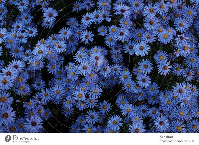 Herbstblau Garten Umwelt Natur Pflanze Sommer Blume Blüte Wiese Bewegung Blumenbeet Tau Tropfen Strukturen & Formen Naturerlebnis erleben herbstlich Blütenblatt