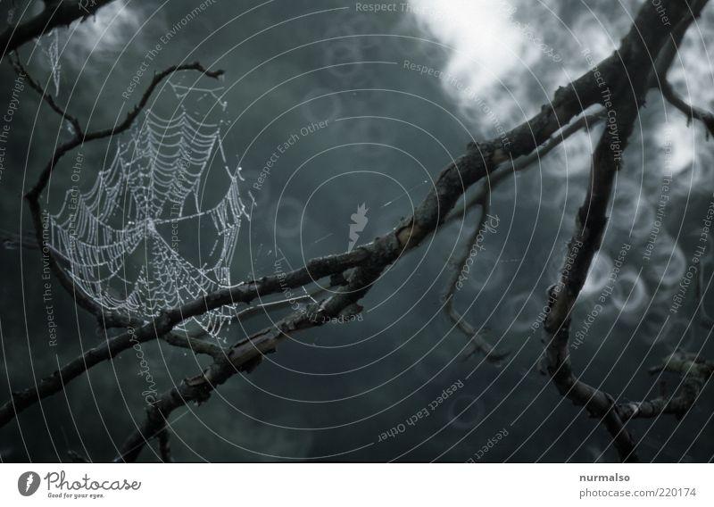 der Herbst, der Spinnt doch Umwelt Natur Landschaft schlechtes Wetter Regen Pflanze Baum Zeichen hängen dunkel nachhaltig nass natürlich Stimmung Netzwerk