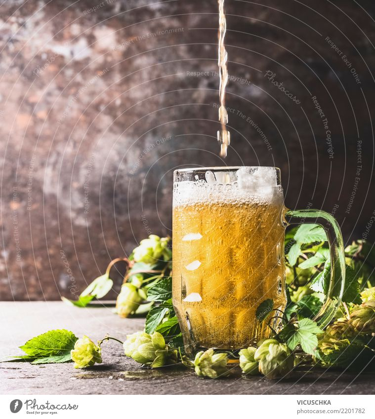 Bier gießt in Biermaß auf Tisch mit frischen Hopfen Sommer Stil Design Getränk Bar Tasse Erfrischungsgetränk Pub Cocktailbar Bierschaum