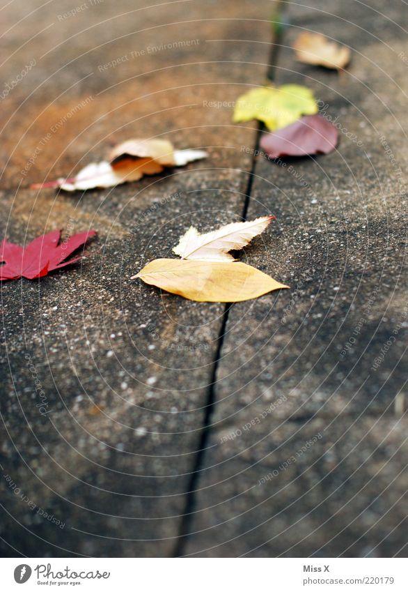 Laub Herbst Blatt mehrfarbig Herbstlaub herbstlich Ahornblatt Bürgersteig Rutschgefahr Farbfoto Außenaufnahme Menschenleer Textfreiraum unten