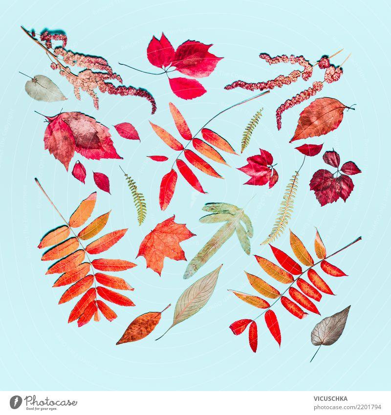 Herbst Composing aus verschiedenen Herbst bunte Blätter Stil Design Dekoration & Verzierung Erntedankfest Natur Pflanze Blatt Zeichen Muster Ornament Stillleben