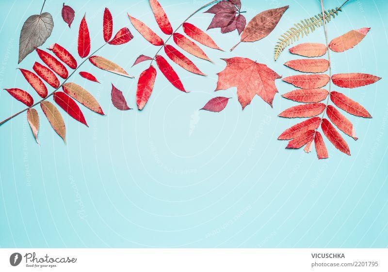 Schöne Herbst Blätter Border Design Sommer Natur Pflanze Blatt Dekoration & Verzierung Zeichen Ornament Hintergrundbild Composing Stillleben Herbstlaub Rahmen