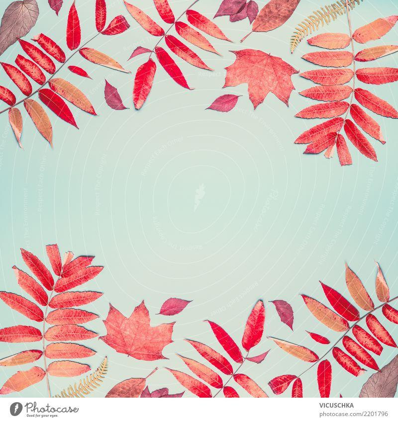 Herbstlicher Hintergrund mit rotem Laub Muster Stil Design Erntedankfest Natur Blatt Dekoration & Verzierung Zeichen Hintergrundbild Composing Rahmen trendy